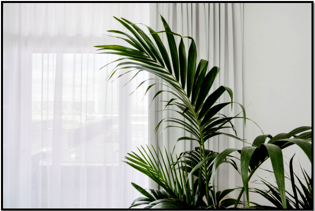 Adding Natural Elements and Greenery in Your New York Home